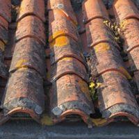 Démoussage de toiture prix et infos